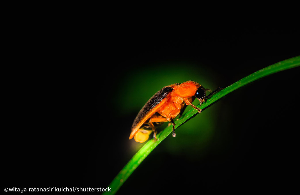 Nature Park & Firefly Extraordinaire