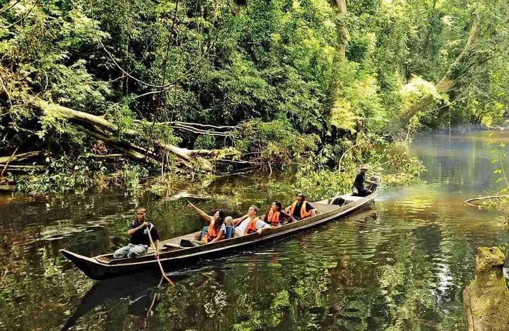 Taman Negara Jungle Experience